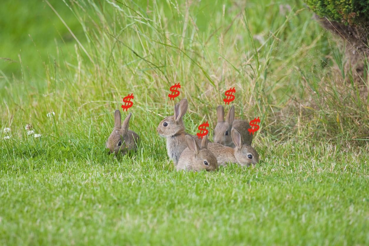 Rabbits and Dollars